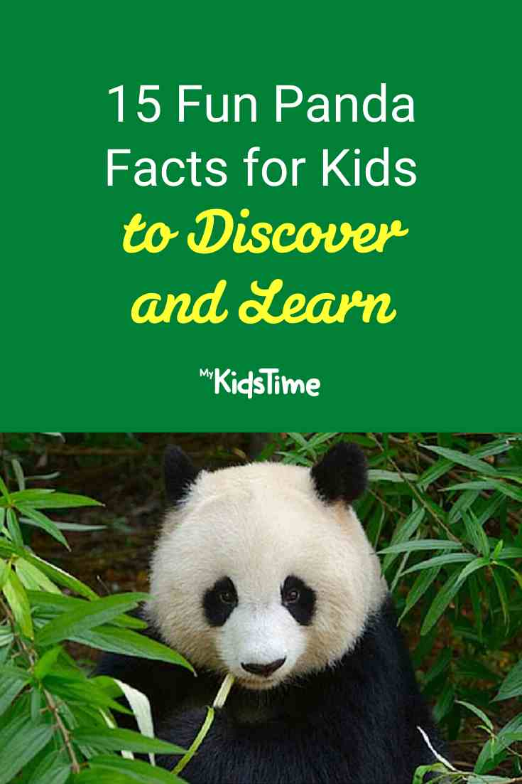 Panda Facts for Kids to Discover and Learn - Mykidstime